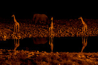 Elephants and giraffes at waterhole - Namibia